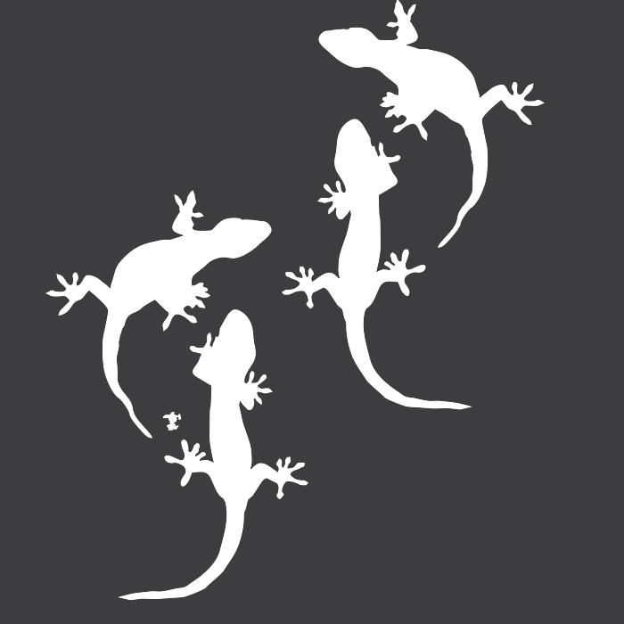 ヤモリとは?トカゲとイモリとの違いは?#爬虫類